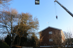 Advanved Tree Removals In Leigh On Sea (1)