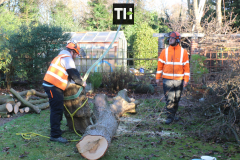 Advanved Tree Removals In Leigh On Sea (11)