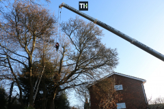 Advanved Tree Removals In Leigh On Sea (2)