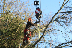 Advanved Tree Removals In Leigh On Sea (4)