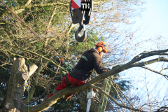 Advanved Tree Removals In Leigh On Sea (5)