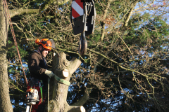 Advanved Tree Removals In Leigh On Sea (6)