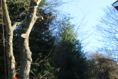Advanved Tree Removals In Leigh On Sea (7)