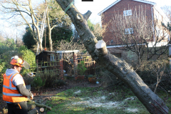 Advanved Tree Removals In Leigh On Sea (8)