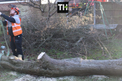 Advanved Tree Removals In Leigh On Sea (9)