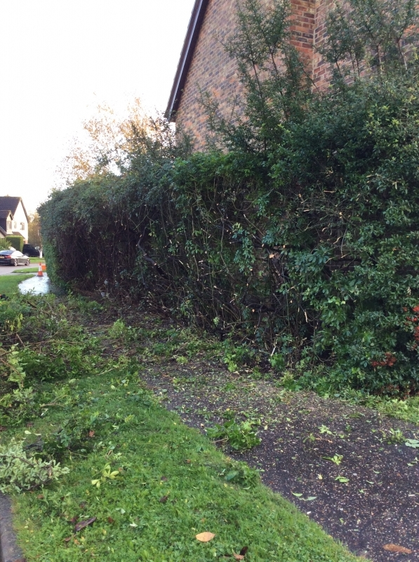 how to cut back a hedge