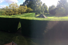 Hedge trimming specialists in Chelmsford 3