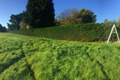 Hedge trimming specialists in Chelmsford 4