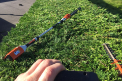 Hedge trimming specialists in Chelmsford 5