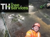 Southend Tree feller, T.H Tree Services