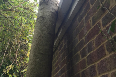 Tree Felling Services In Havering