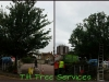 Tree Reduction In Leigh On Sea