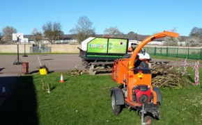 Tree Services for schools