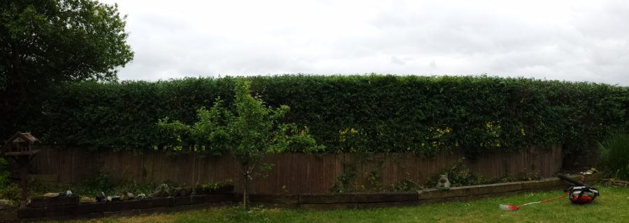 Hedge Trimming Essex