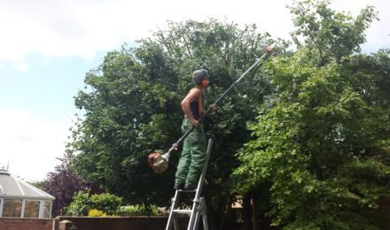 Tree Reduction Essex