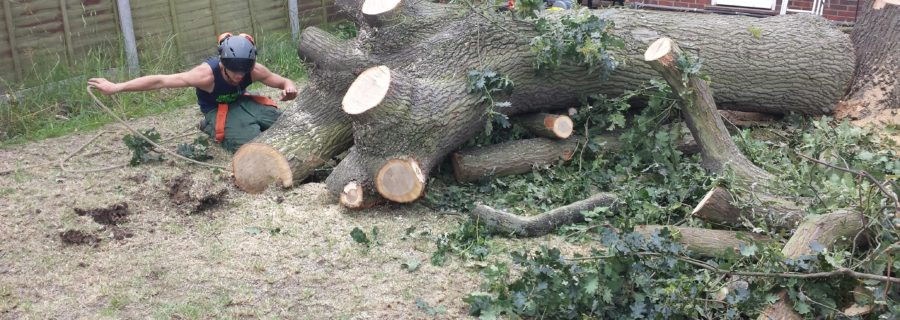 Tree Removal Essex