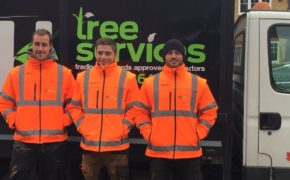 Tree Surgeon Chelmsford