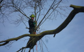 Tree Surgeon Southend