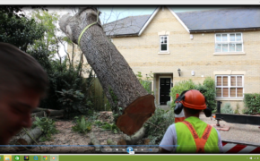 Tree Surgeon South Woodham Ferrers