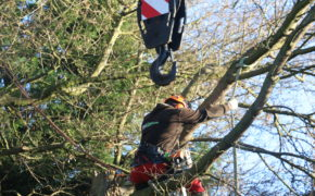 Tree Surgeon Billericay