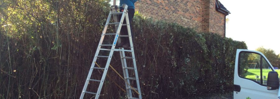 cutting back hedges in Wickford