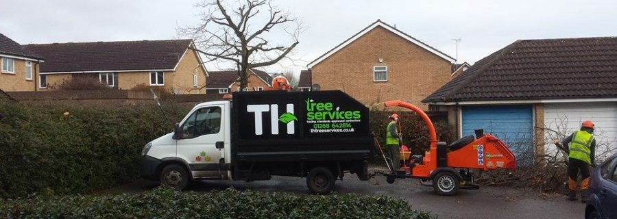 Council Approved Tree Surgeon