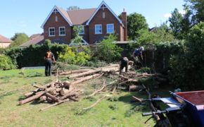 Upminster Tree Felling & Tree Removal