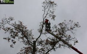 Tree cutters Benfleet