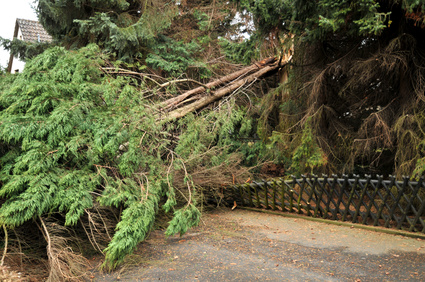 Fallen Trees & Branches: Who's Responsibility?