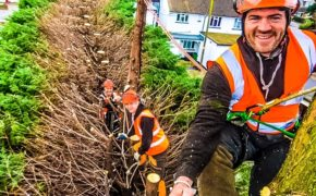 Conifer Tree Trimming In Rayleigh