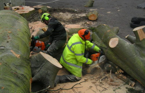 Brentwood tree surgeons