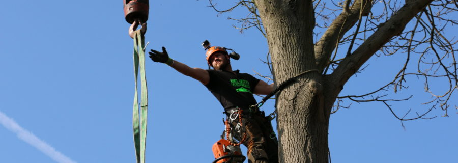 Tree Surgeon Brentwood