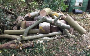 Tree Felling Service in Havering