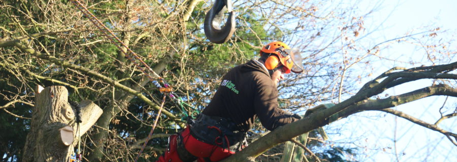 Advanced Tree Removals In Leigh On Sea
