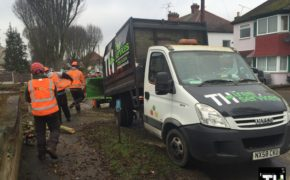 Tree Felling Company In Southend (4)