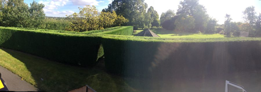 Hedge Trimming Specialists In Chelmsford