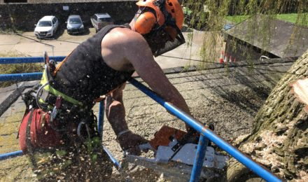 Expert Tree Surgeon In Essex