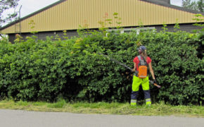 Lady Hedge Trimming