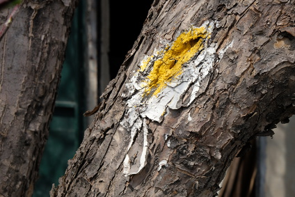 Tree wound paint