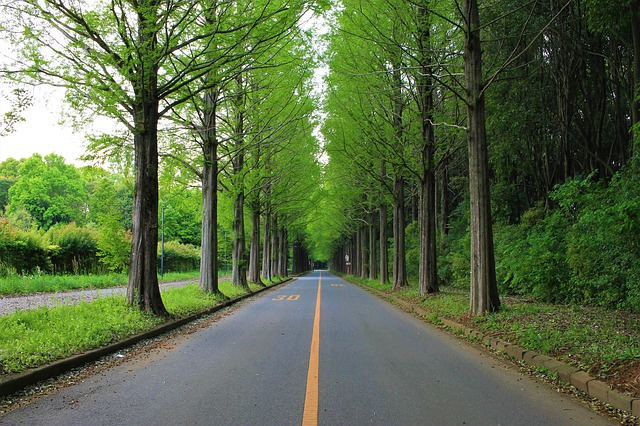 Best trees to combat road noise