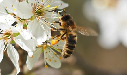 Pollinator friendly trees