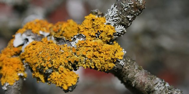Algae, moss and lichen on trees